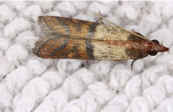 How to Remove Moths From Wood? Step by Step