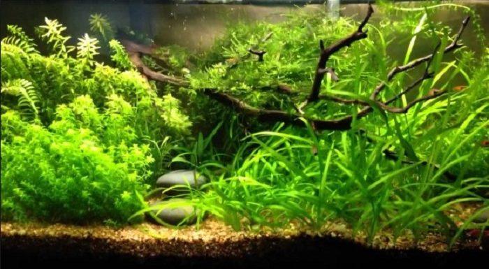 How to Fertilize Aquarium Plants Naturally