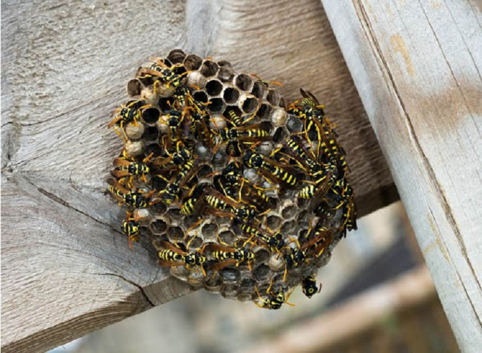 how to remove bee hive from home