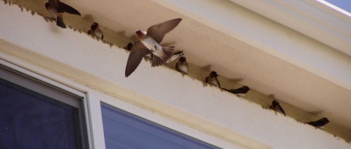 How to Keep Birds From Nesting Under Roof