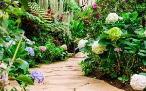 plants for walkways