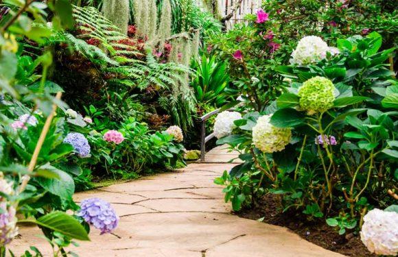 Best Plants for Walkways