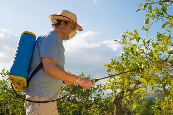 homemade pesticide for fruit trees