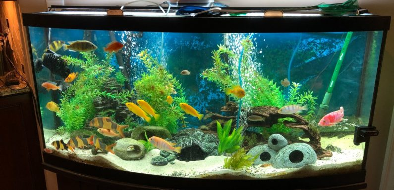 Absolute Best Spots To Setup A Fish Tank In Your Home!