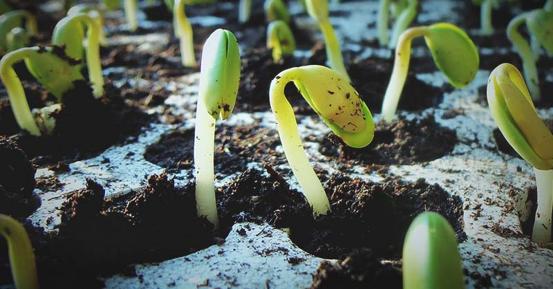 common mistakes when growing seeds