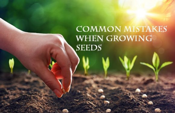 16 common mistakes when growing seeds
