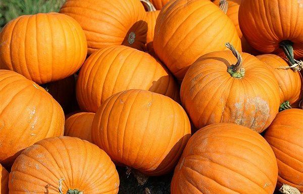 How long do pumpkins last?